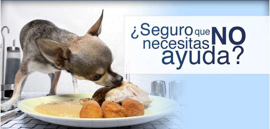 adiestrador-canino-ciudad-real