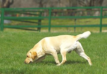 juegos-de-olfato-hotel-canino-madrid