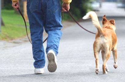 paseao-con-perro-residencia-canina