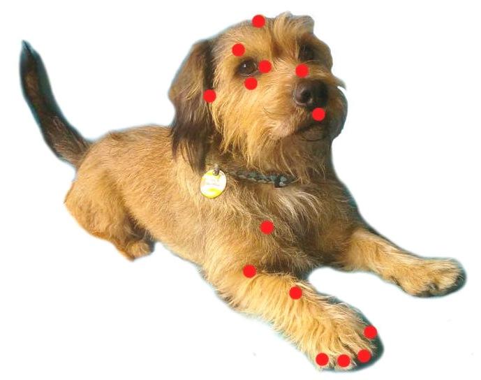 tapping-en-perros